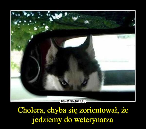Cholera, chyba się zorientował, że jedziemy do weterynarza –