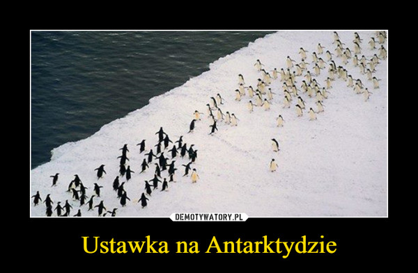 Ustawka na Antarktydzie –