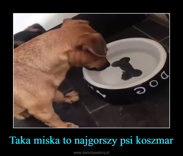 Taka miska to najgorszy psi koszmar –