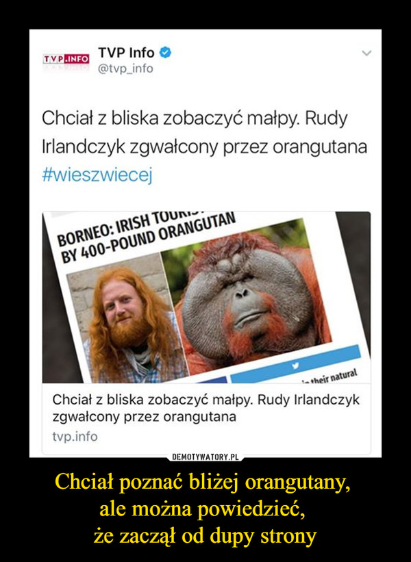 Chciał poznać bliżej orangutany, ale można powiedzieć, że zaczął od dupy strony –  Chciał z bliska zobaczyć małpy. Rudy Irlandczyk zgwałcony przez orangutana #wieszwiecej tvp.info
