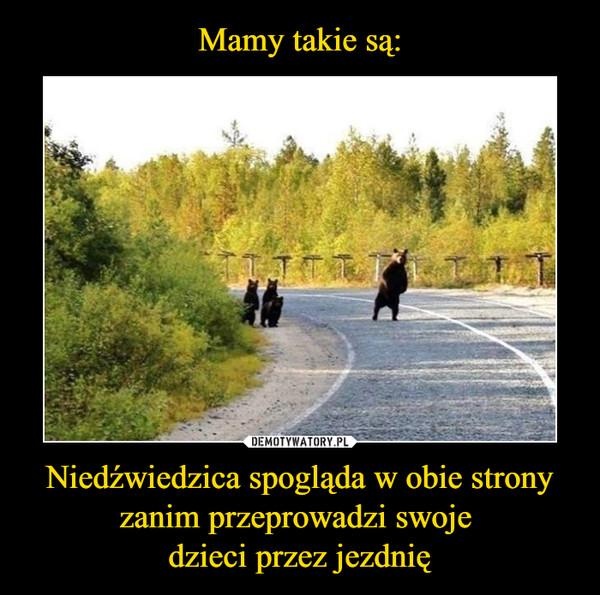Niedźwiedzica spogląda w obie strony zanim przeprowadzi swoje dzieci przez jezdnię –