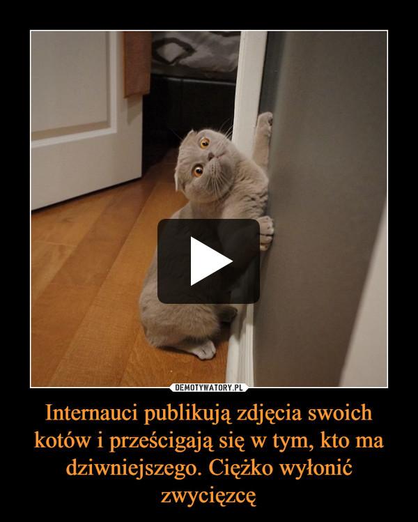 Internauci publikują zdjęcia swoich kotów i prześcigają się w tym, kto ma dziwniejszego. Ciężko wyłonić zwycięzcę –