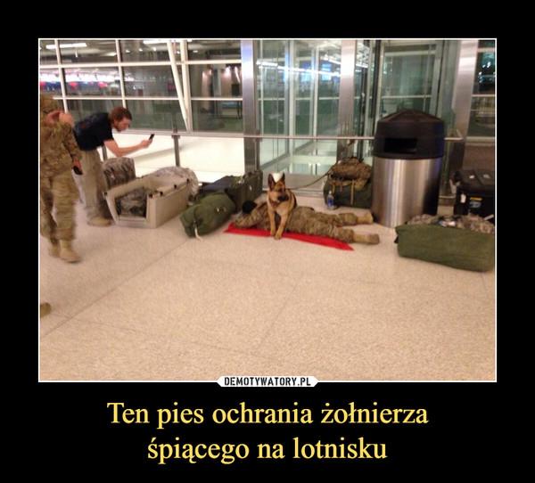 Ten pies ochrania żołnierzaśpiącego na lotnisku –