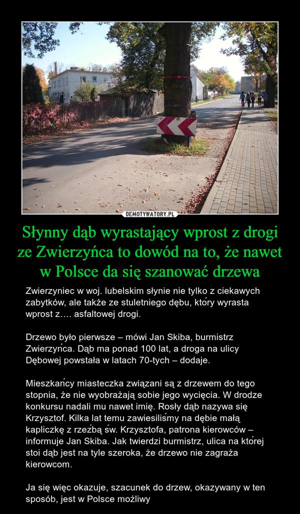 Słynny dąb wyrastający wprost z drogi ze Zwierzyńca to dowód na to, że nawet w Polsce da się szanować drzewa – Zwierzyniec w woj. lubelskim słynie nie tylko z ciekawych zabytków, ale także ze stuletniego dębu, który wyrasta wprost z…. asfaltowej drogi.Drzewo było pierwsze – mówi Jan Skiba, burmistrz Zwierzyńca. Dąb ma ponad 100 lat, a droga na ulicy Dębowej powstała w latach 70-tych – dodaje.Mieszkańcy miasteczka związani są z drzewem do tego stopnia, że nie wyobrażają sobie jego wycięcia. W drodze konkursu nadali mu nawet imię. Rosły dąb nazywa się Krzysztof. Kilka lat temu zawiesiliśmy na dębie małą kapliczkę z rzeźbą św. Krzysztofa, patrona kierowców – informuje Jan Skiba. Jak twierdzi burmistrz, ulica na której stoi dąb jest na tyle szeroka, że drzewo nie zagraża kierowcom.Ja się więc okazuje, szacunek do drzew, okazywany w ten sposób, jest w Polsce możliwy