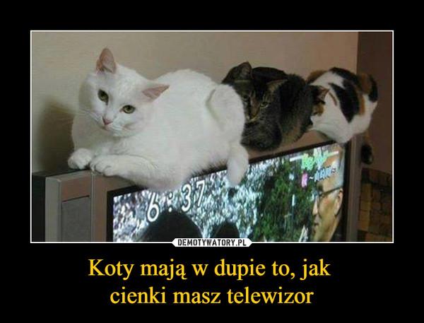 Koty mają w dupie to, jak cienki masz telewizor –
