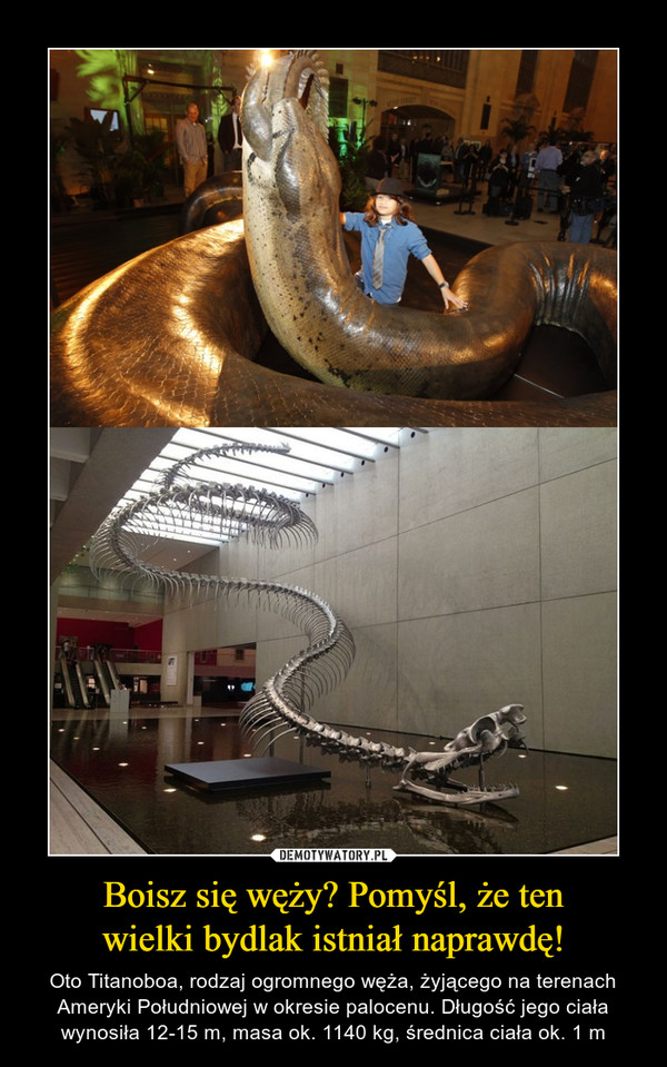 Boisz się węży? Pomyśl, że tenwielki bydlak istniał naprawdę! – Oto Titanoboa, rodzaj ogromnego węża, żyjącego na terenach Ameryki Południowej w okresie palocenu. Długość jego ciała wynosiła 12-15 m, masa ok. 1140 kg, średnica ciała ok. 1 m