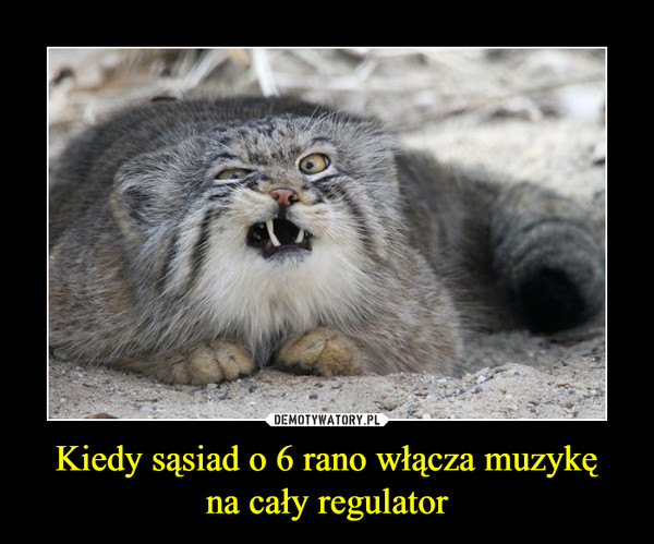 Kiedy sąsiad o 6 rano włącza muzykęna cały regulator –