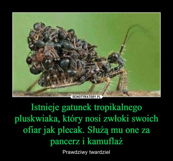 Istnieje gatunek tropikalnego pluskwiaka, który nosi zwłoki swoich ofiar jak plecak. Służą mu one za pancerz i kamuflaż – Prawdziwy twardziel