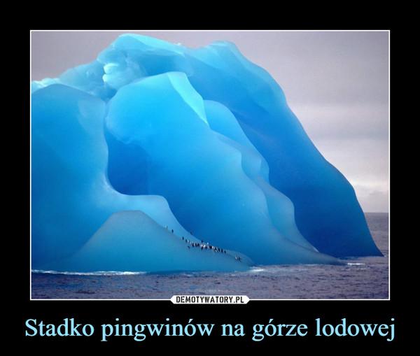 Stadko pingwinów na górze lodowej –