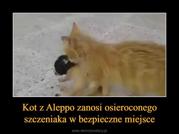 Kot z Aleppo zanosi osieroconego szczeniaka w bezpieczne miejsce –