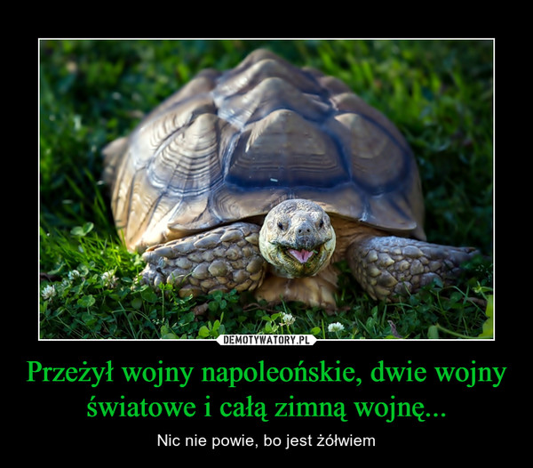 Przeżył wojny napoleońskie, dwie wojny światowe i całą zimną wojnę... – Nic nie powie, bo jest żółwiem