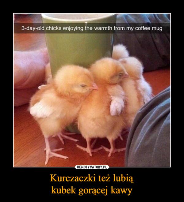 Kurczaczki też lubiąkubek gorącej kawy –