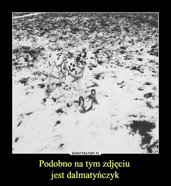 Podobno na tym zdjęciu jest dalmatyńczyk –