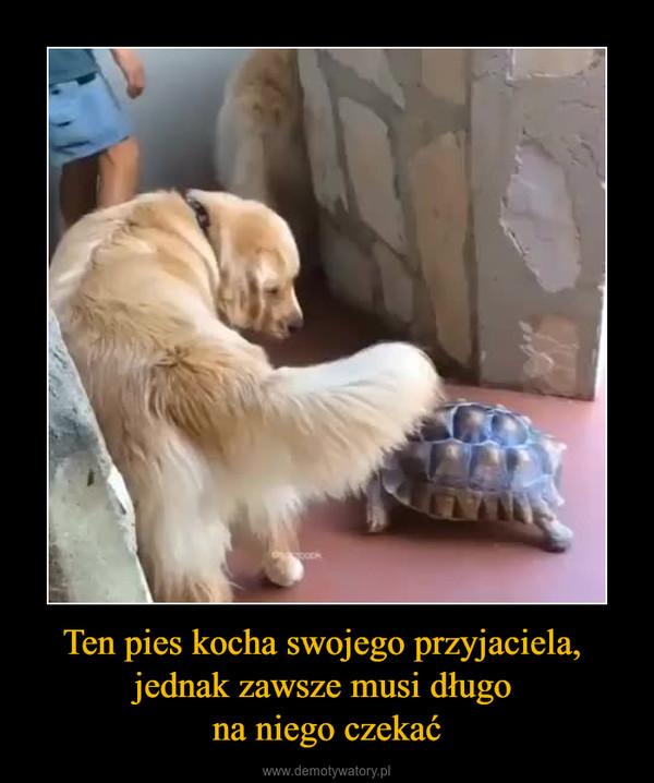 Ten pies kocha swojego przyjaciela, jednak zawsze musi długo na niego czekać –