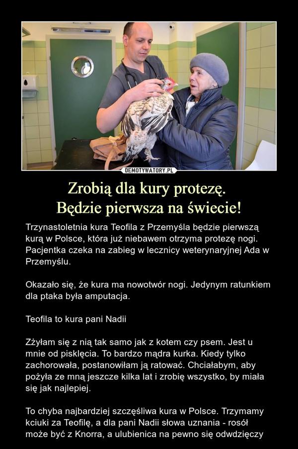 Zrobią dla kury protezę. Będzie pierwsza na świecie! – Trzynastoletnia kura Teofila z Przemyśla będzie pierwszą kurą w Polsce, która już niebawem otrzyma protezę nogi. Pacjentka czeka na zabieg w lecznicy weterynaryjnej Ada w Przemyślu. Okazało się, że kura ma nowotwór nogi. Jedynym ratunkiem dla ptaka była amputacja.Teofila to kura pani NadiiZżyłam się z nią tak samo jak z kotem czy psem. Jest u mnie od pisklęcia. To bardzo mądra kurka. Kiedy tylko zachorowała, postanowiłam ją ratować. Chciałabym, aby pożyła ze mną jeszcze kilka lat i zrobię wszystko, by miała się jak najlepiej. To chyba najbardziej szczęśliwa kura w Polsce. Trzymamy kciuki za Teofilę, a dla pani Nadii słowa uznania - rosół może być z Knorra, a ulubienica na pewno się odwdzięczy