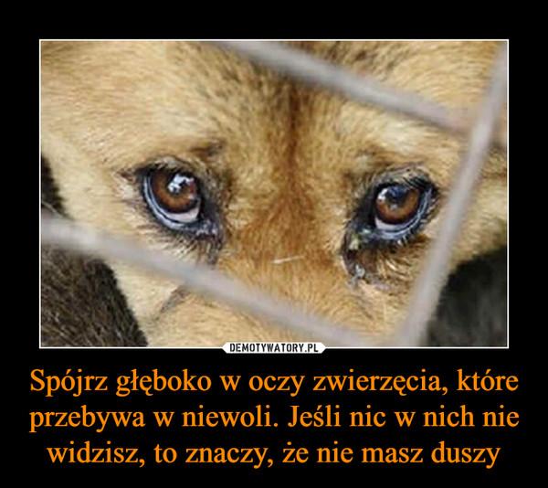 Spójrz głęboko w oczy zwierzęcia, które przebywa w niewoli. Jeśli nic w nich nie widzisz, to znaczy, że nie masz duszy –