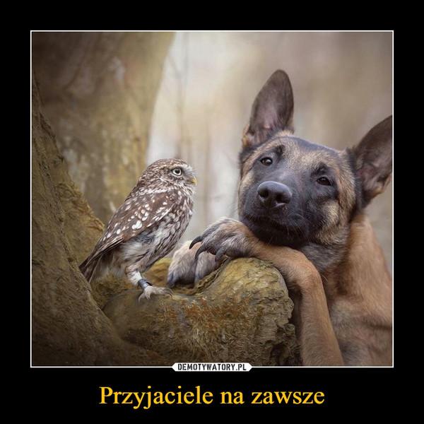 Przyjaciele na zawsze –