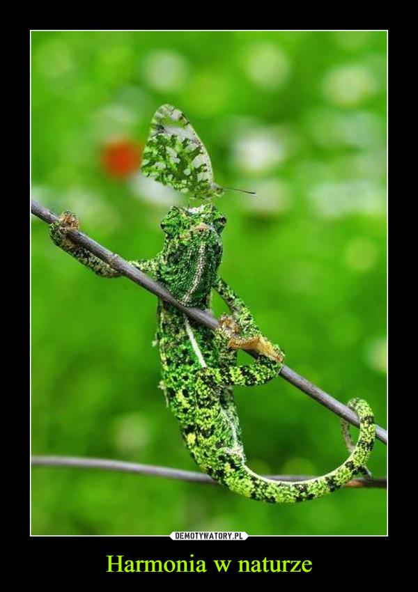 Harmonia w naturze –