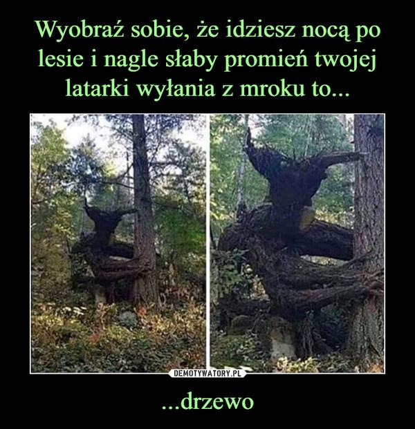 ...drzewo –