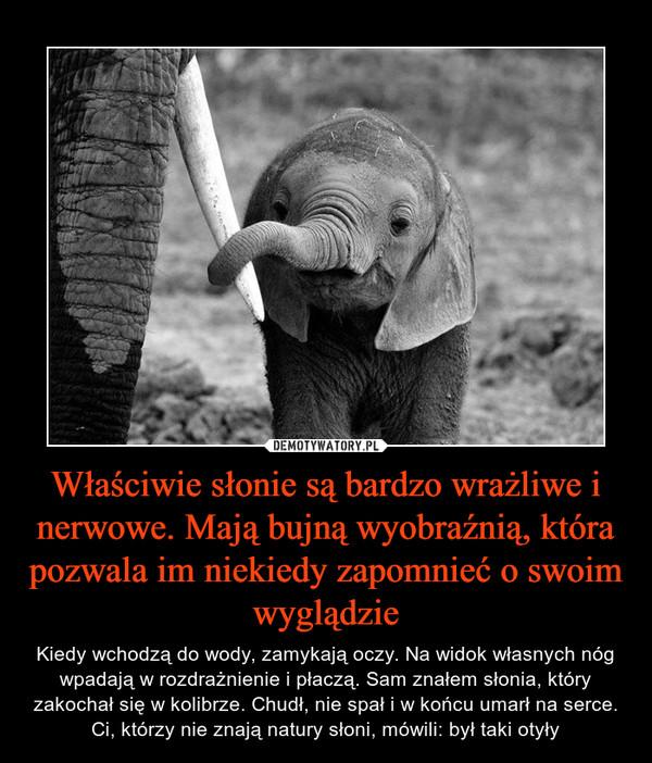 Właściwie słonie są bardzo wrażliwe i nerwowe. Mają bujną wyobraźnią, która pozwala im niekiedy zapomnieć o swoim wyglądzie – Kiedy wchodzą do wody, zamykają oczy. Na widok własnych nóg wpadają w rozdrażnienie i płaczą. Sam znałem słonia, który zakochał się w kolibrze. Chudł, nie spał i w końcu umarł na serce. Ci, którzy nie znają natury słoni, mówili: był taki otyły