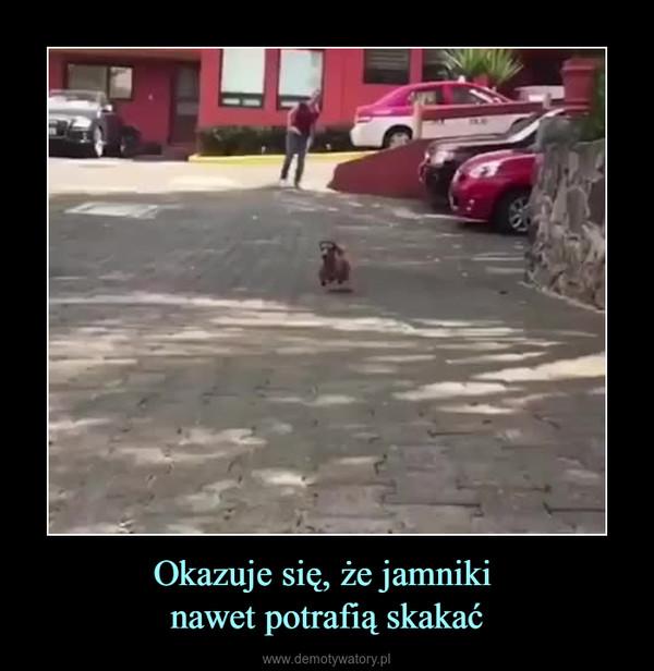 Okazuje się, że jamniki nawet potrafią skakać –