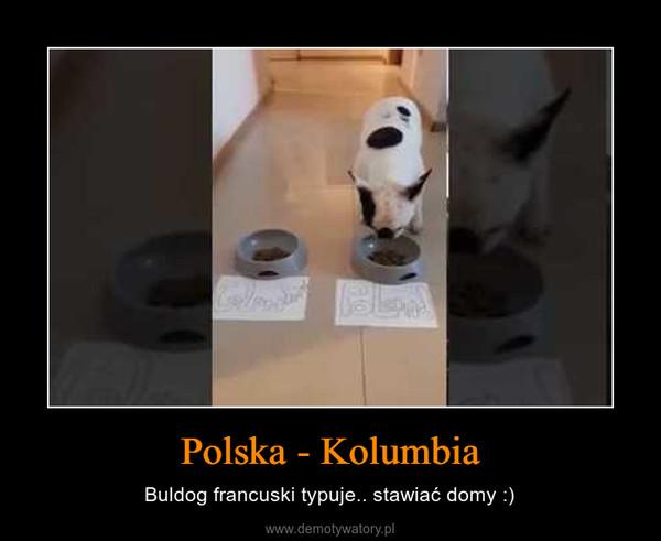 Polska - Kolumbia – Buldog francuski typuje.. stawiać domy :)
