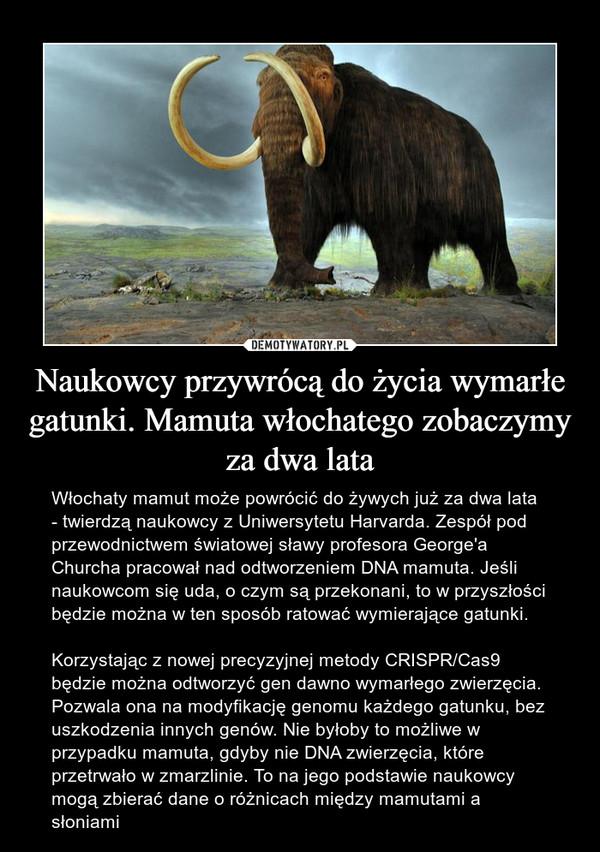 Naukowcy przywrócą do życia wymarłe gatunki. Mamuta włochatego zobaczymy za dwa lata – Włochaty mamut może powrócić do żywych już za dwa lata - twierdzą naukowcy z Uniwersytetu Harvarda. Zespół pod przewodnictwem światowej sławy profesora George'a Churcha pracował nad odtworzeniem DNA mamuta. Jeśli naukowcom się uda, o czym są przekonani, to w przyszłości będzie można w ten sposób ratować wymierające gatunki.Korzystając z nowej precyzyjnej metody CRISPR/Cas9 będzie można odtworzyć gen dawno wymarłego zwierzęcia. Pozwala ona na modyfikację genomu każdego gatunku, bez uszkodzenia innych genów. Nie byłoby to możliwe w przypadku mamuta, gdyby nie DNA zwierzęcia, które przetrwało w zmarzlinie. To na jego podstawie naukowcy mogą zbierać dane o różnicach między mamutami a słoniami