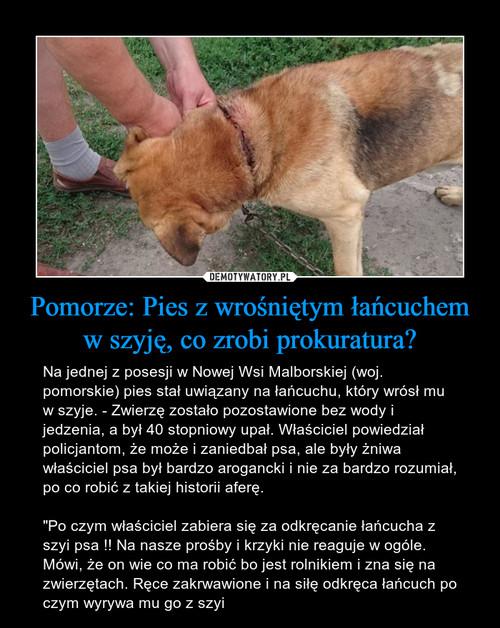 Pomorze: Pies z wrośniętym łańcuchem w szyję, co zrobi prokuratura?