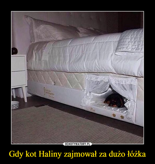 Gdy kot Haliny zajmował za dużo łóżka