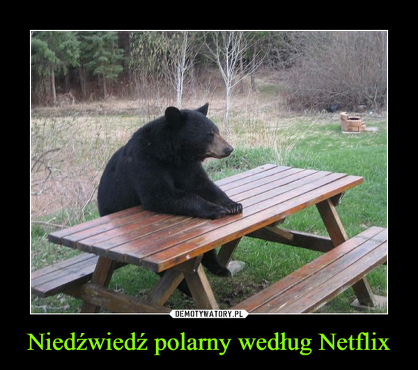 Niedźwiedź polarny według Netflix –