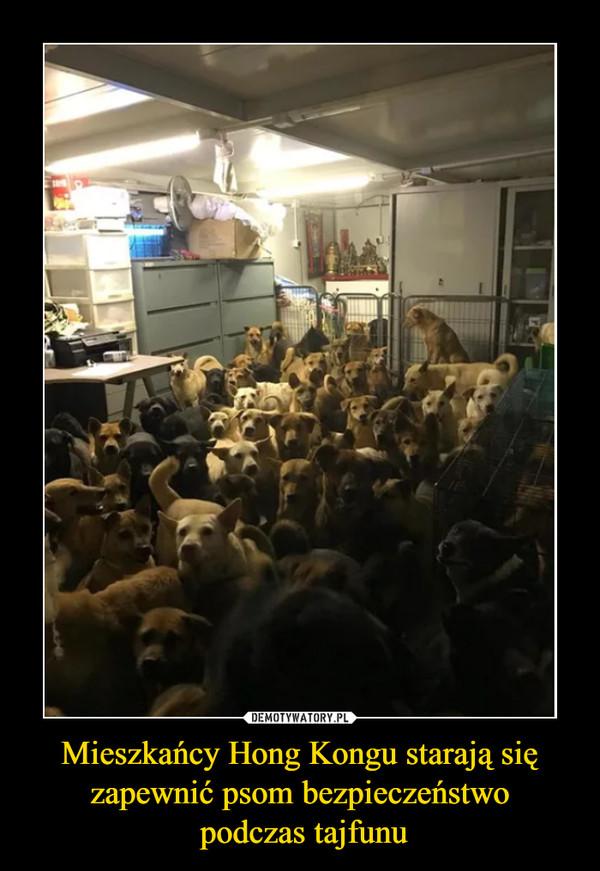 Mieszkańcy Hong Kongu starają się zapewnić psom bezpieczeństwo podczas tajfunu –