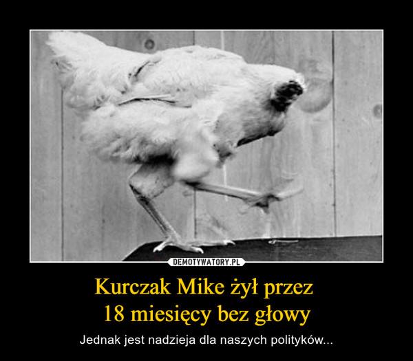 Kurczak Mike żył przez 18 miesięcy bez głowy – Jednak jest nadzieja dla naszych polityków...