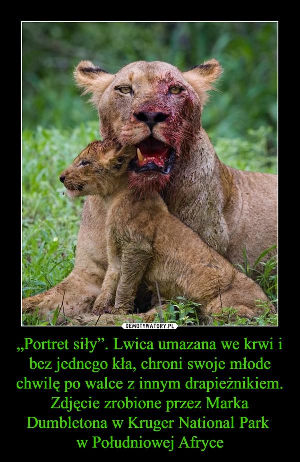 """""""Portret siły"""". Lwica umazana we krwi i bez jednego kła, chroni swoje młode chwilę po walce z innym drapieżnikiem. Zdjęcie zrobione przez Marka Dumbletona w Kruger National Park w Południowej Afryce –"""