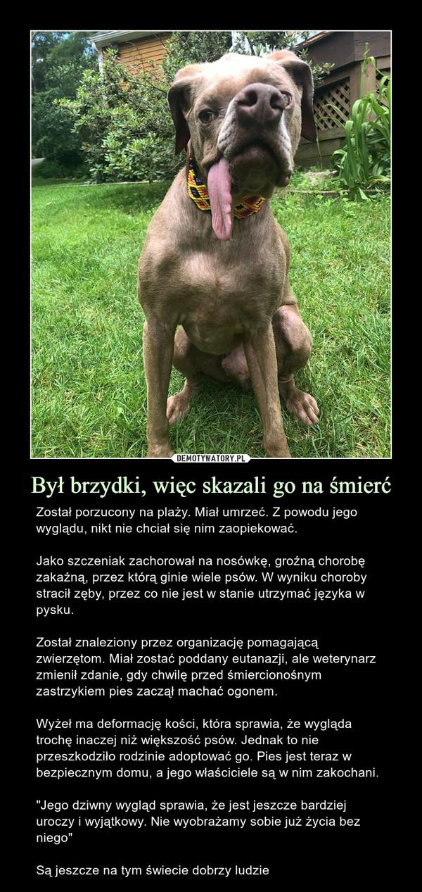 """Był brzydki, więc skazali go na śmierć – Został porzucony na plaży. Miał umrzeć. Z powodu jego wyglądu, nikt nie chciał się nim zaopiekować. Jako szczeniak zachorował na nosówkę, groźną chorobę zakaźną, przez którą ginie wiele psów. W wyniku choroby stracił zęby, przez co nie jest w stanie utrzymać języka w pysku.Został znaleziony przez organizację pomagającą zwierzętom. Miał zostać poddany eutanazji, ale weterynarz zmienił zdanie, gdy chwilę przed śmiercionośnym zastrzykiem pies zaczął machać ogonem.Wyżeł ma deformację kości, która sprawia, że wygląda trochę inaczej niż większość psów. Jednak to nie przeszkodziło rodzinie adoptować go. Pies jest teraz w bezpiecznym domu, a jego właściciele są w nim zakochani.""""Jego dziwny wygląd sprawia, że jest jeszcze bardziej uroczy i wyjątkowy. Nie wyobrażamy sobie już życia bez niego""""Są jeszcze na tym świecie dobrzy ludzie"""