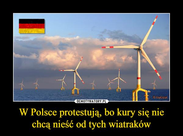 W Polsce protestują, bo kury się nie chcą nieść od tych wiatraków –