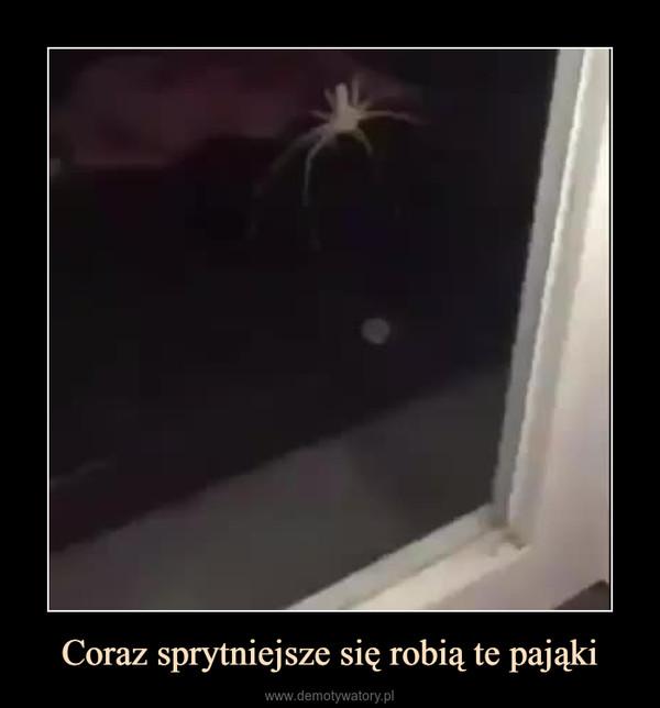 Coraz sprytniejsze się robią te pająki –