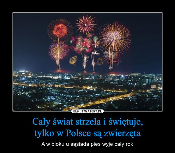 Cały świat strzela i świętuje,tylko w Polsce są zwierzęta – A w bloku u sąsiada pies wyje cały rok