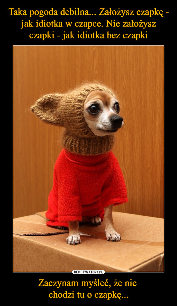 Zaczynam myśleć, że nie chodzi tu o czapkę... –