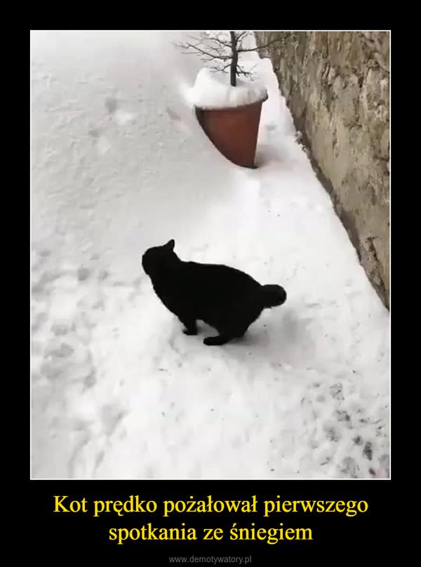 Kot prędko pożałował pierwszego spotkania ze śniegiem –
