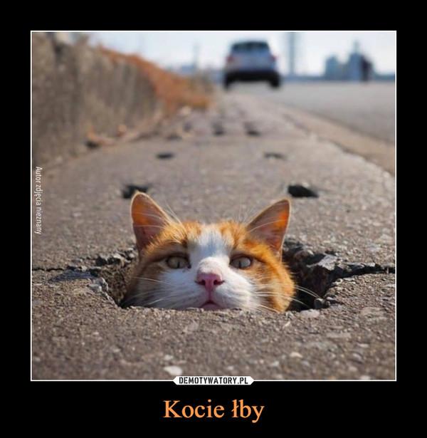 Kocie łby –