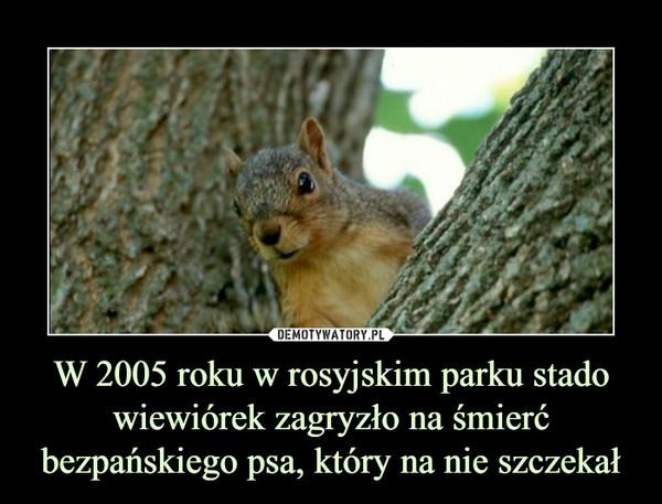 W 2005 roku w rosyjskim parku stado wiewiórek zagryzło na śmierć bezpańskiego psa, który na nie szczekał –