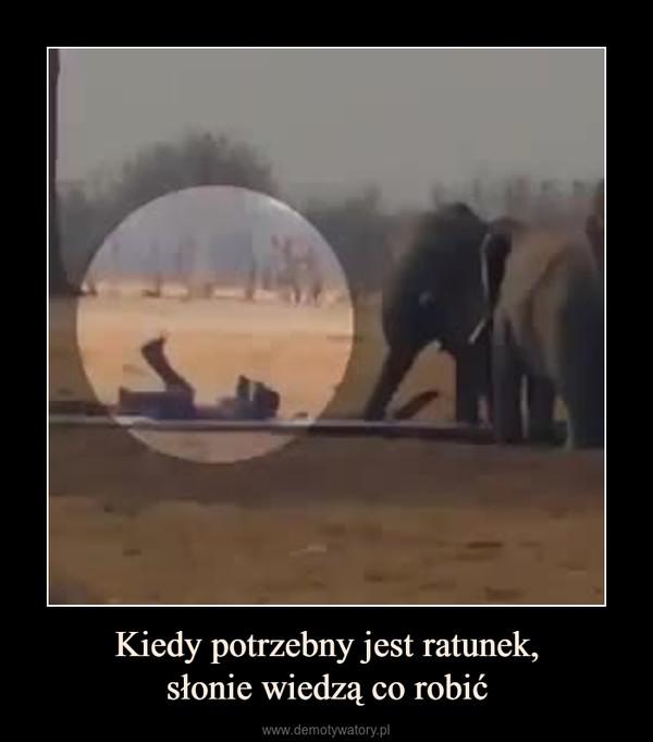 Kiedy potrzebny jest ratunek,słonie wiedzą co robić –