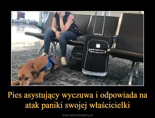 Pies asystujący wyczuwa i odpowiada na atak paniki swojej właścicielki –