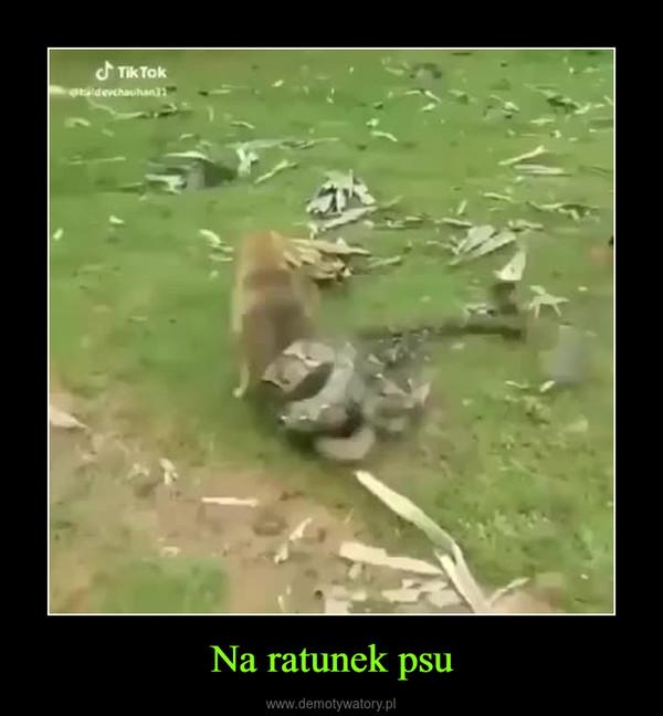Na ratunek psu –