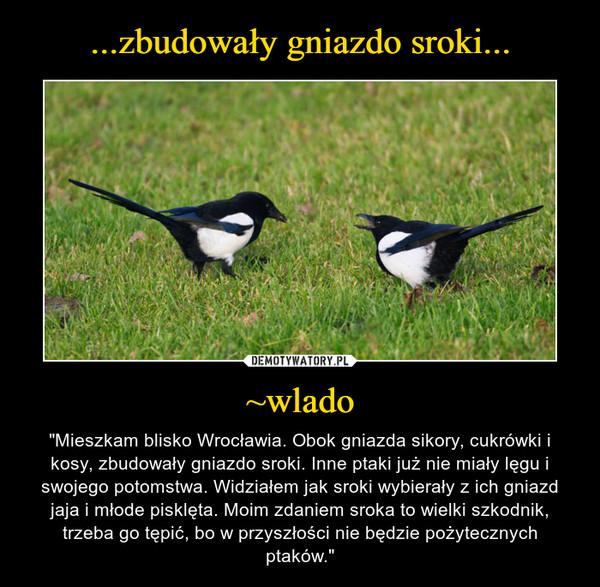 """~wlado – """"Mieszkam blisko Wrocławia. Obok gniazda sikory, cukrówki i kosy, zbudowały gniazdo sroki. Inne ptaki już nie miały lęgu i swojego potomstwa. Widziałem jak sroki wybierały z ich gniazd jaja i młode pisklęta. Moim zdaniem sroka to wielki szkodnik, trzeba go tępić, bo w przyszłości nie będzie pożytecznych ptaków."""""""
