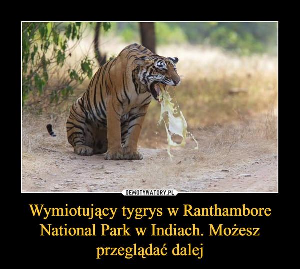 Wymiotujący tygrys w Ranthambore National Park w Indiach. Możesz przeglądać dalej –