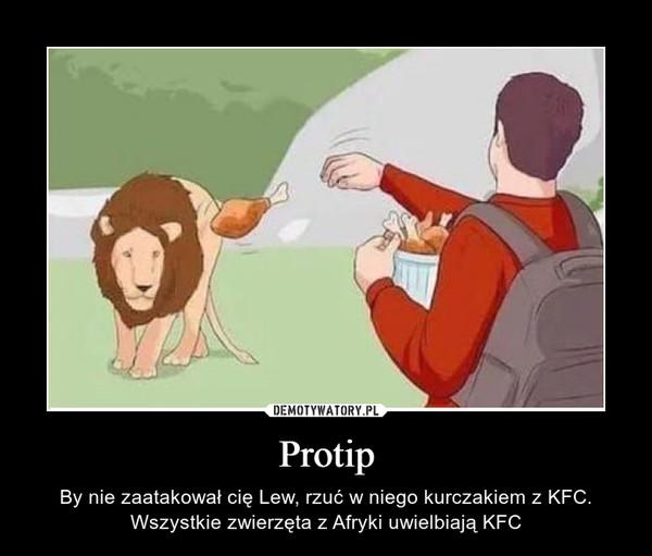 Protip – By nie zaatakował cię Lew, rzuć w niego kurczakiem z KFC. Wszystkie zwierzęta z Afryki uwielbiają KFC