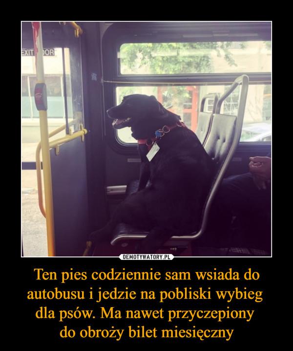 Ten pies codziennie sam wsiada do autobusu i jedzie na pobliski wybieg dla psów. Ma nawet przyczepiony do obroży bilet miesięczny –