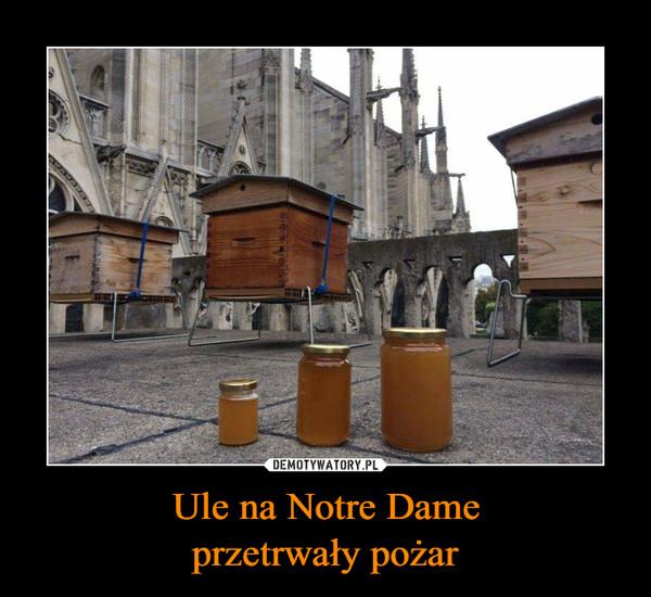 Ule na Notre Dameprzetrwały pożar –