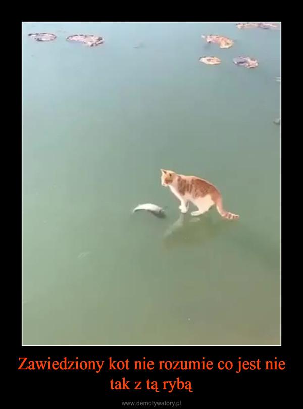 Zawiedziony kot nie rozumie co jest nie tak z tą rybą –